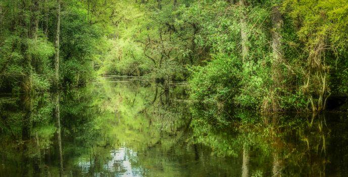 Фото бесплатно лес, деревья, водоём