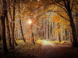Бесплатные фото закат, осень, лес, деревья, дорога, пейзаж