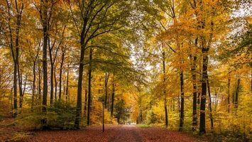 Заставки осень, лес, парк, деревья, дорога, пейзаж
