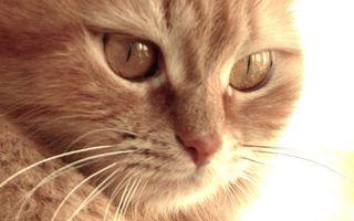 Бесплатные фото кот,морда,глаза,нос,усы,шерсть