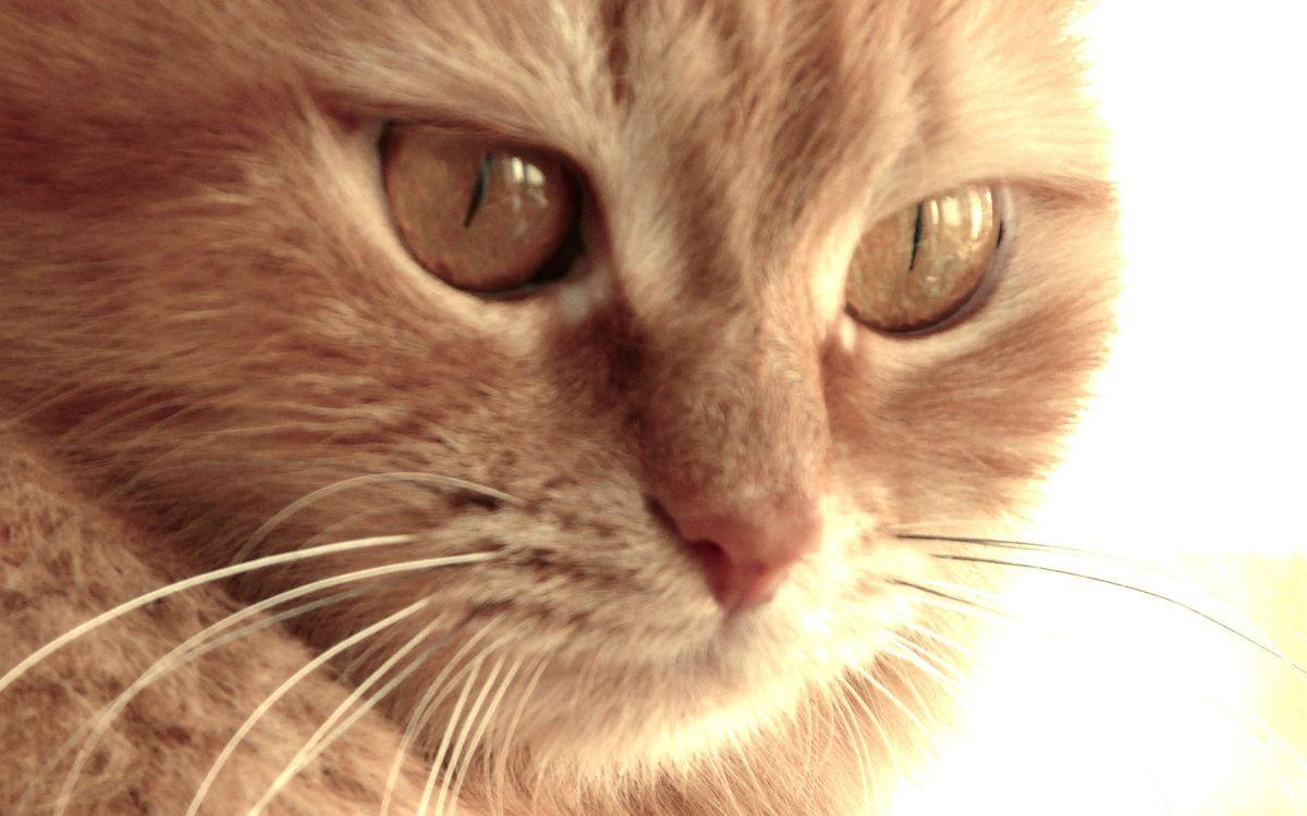 Фото бесплатно кот, морда, глаза, нос, усы, шерсть, кошки - скачать на рабочий стол