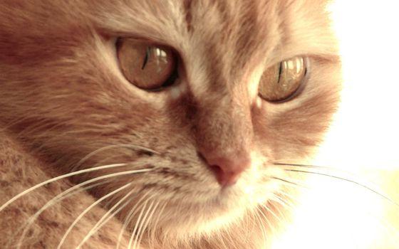 Фото бесплатно кот, морда, глаза, нос, усы, шерсть