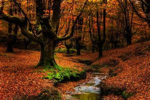 Фото бесплатно пейзаж, лес, Бискайя