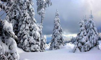 Фото бесплатно снегопад, сугробы, деревья, елки, зима