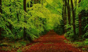 Бесплатные фото лес, деревья, дорога, природа