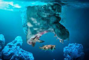 Фото бесплатно : рыбка, бегемот, ловись