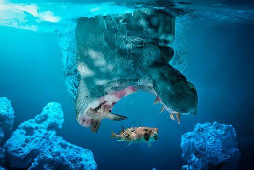 Photo free : fish, Hippo, caught