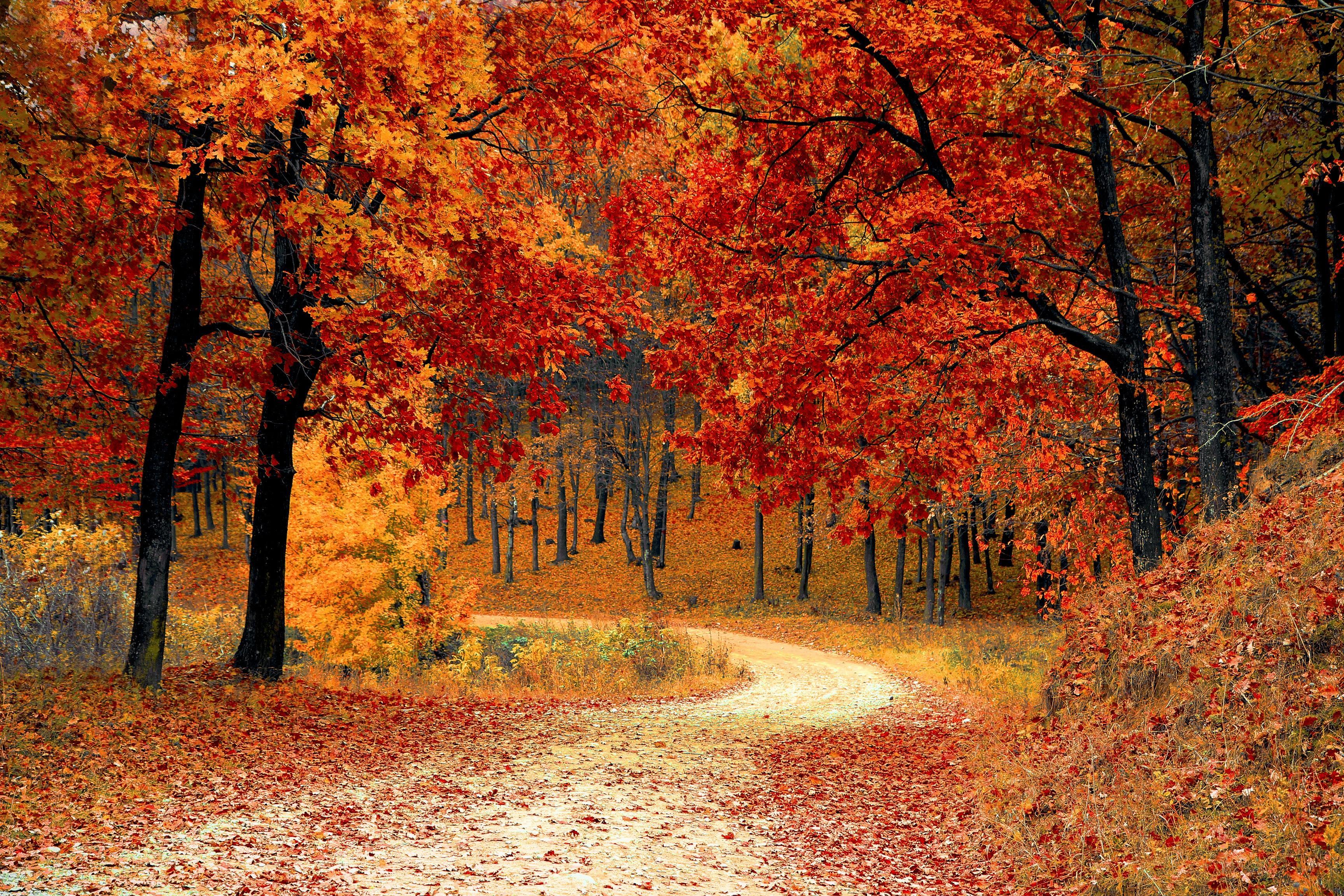 Обои осень, лес, деревья, дорога