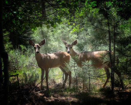 Бесплатные фото олени,лес,природа,животные,деревья,сосны,трава,листья