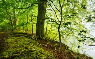 Photo free forest, trees, nature
