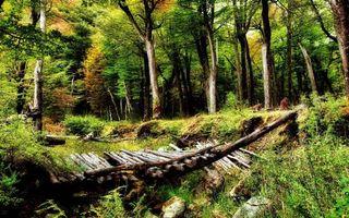 Обои лес, деревья, трава, яма, мост сломанный, коряги, камни