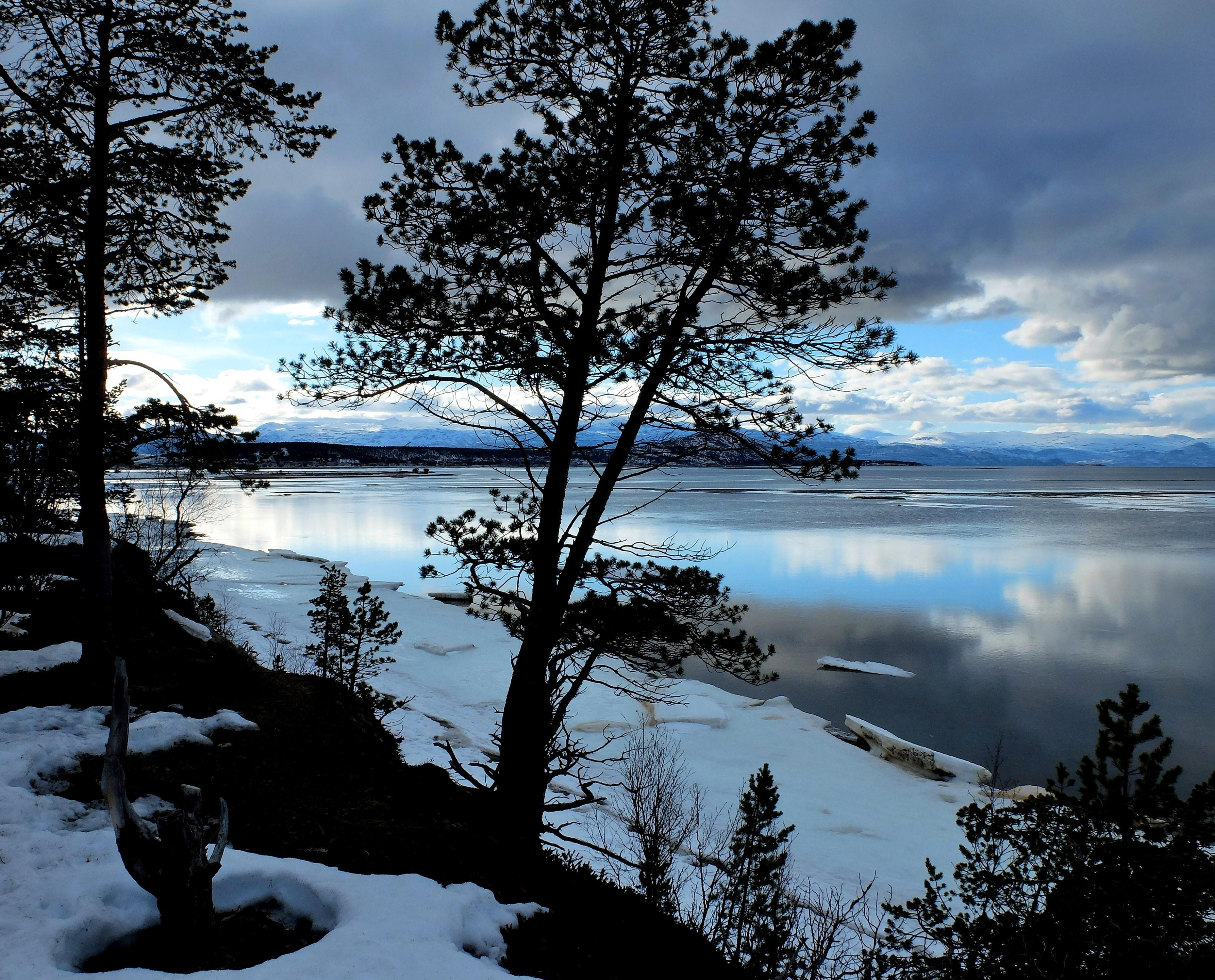 обои зима, озеро, деревья, пейзаж картинки фото