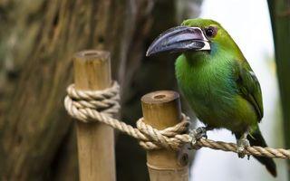 Photo free bamboo, rope, bird