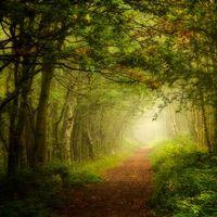 Бесплатные фото лес,деревья,природа,туман,тропинка