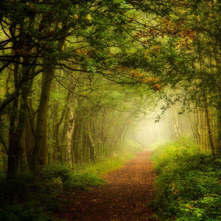 Красивые обои деревья, лес на телефон