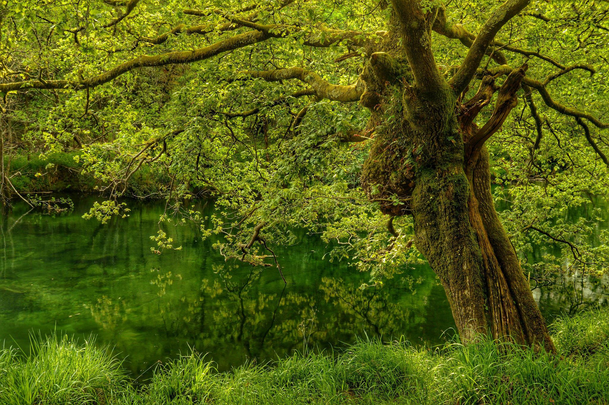 Обои лес, дерево, водоём, природа