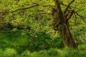 Заставки лес, дерево, водоём, природа