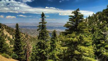 Фото бесплатно горы, лес, деревья