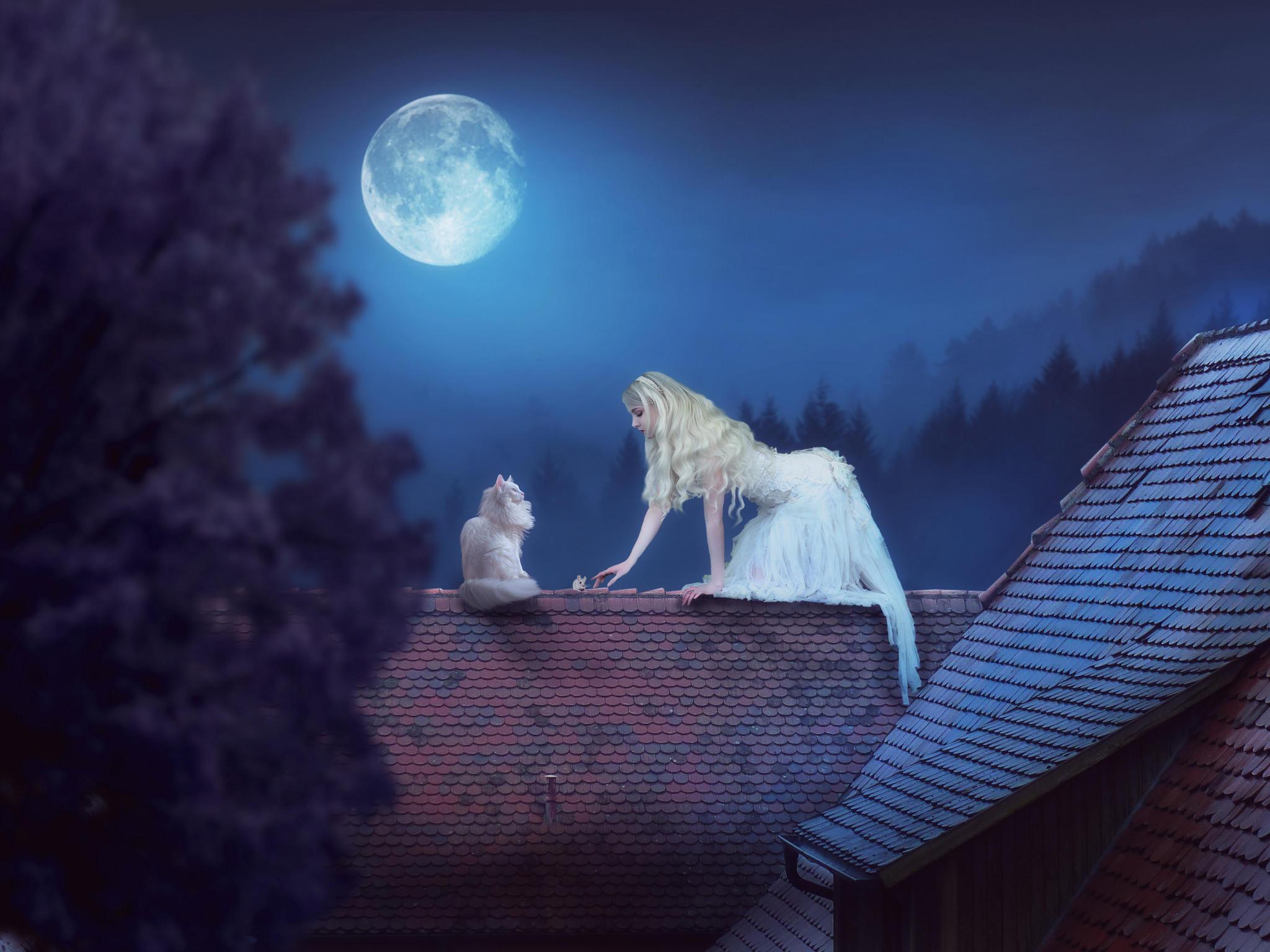 Обои ночь, девушка, кошка, фантазия