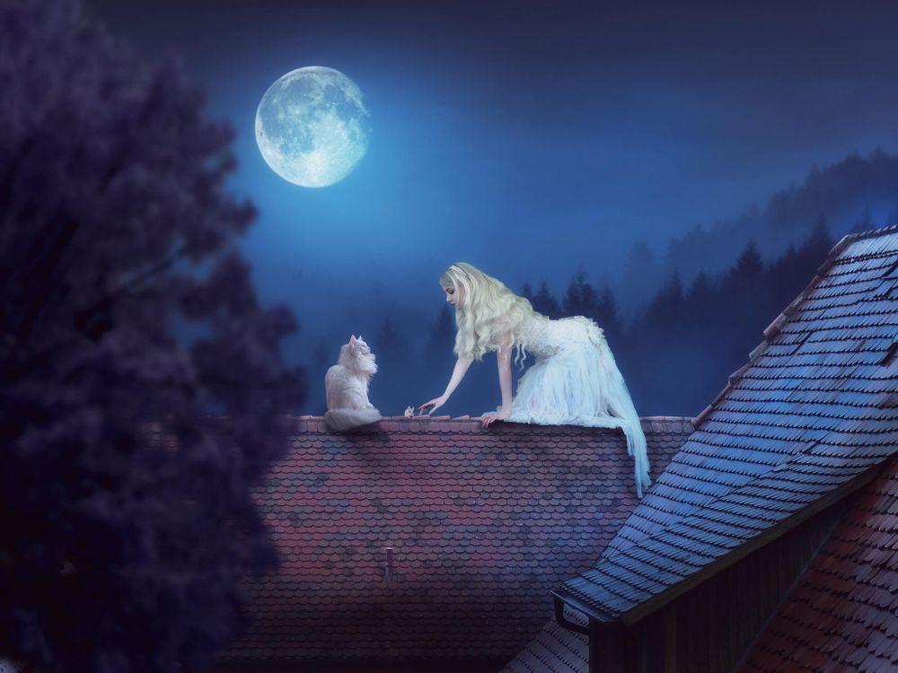 Фото бесплатно ночь, девушка, кошка - на рабочий стол
