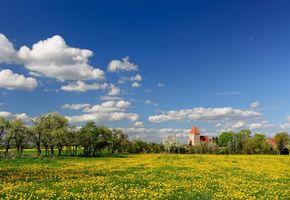 Фото бесплатно деревья, цветение, весна