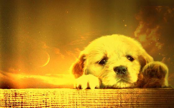 Бесплатные фото щенок,морда,лапы,шерсть,небо