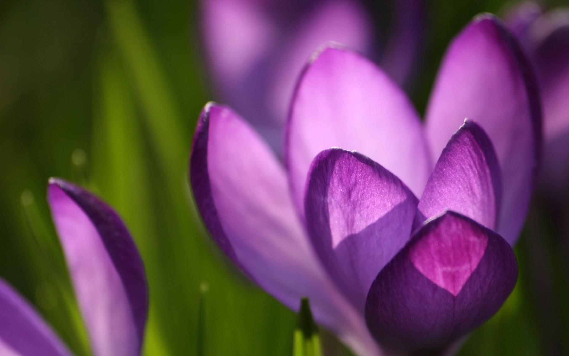 Фотографии цветов в хорошем качестве фиолетовые