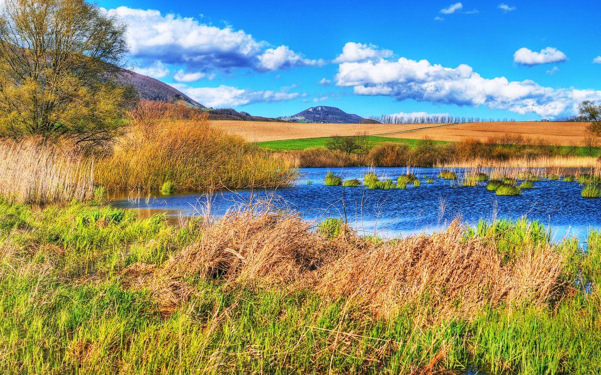 Фото бесплатно озеро, трава, кустарник - на рабочий стол