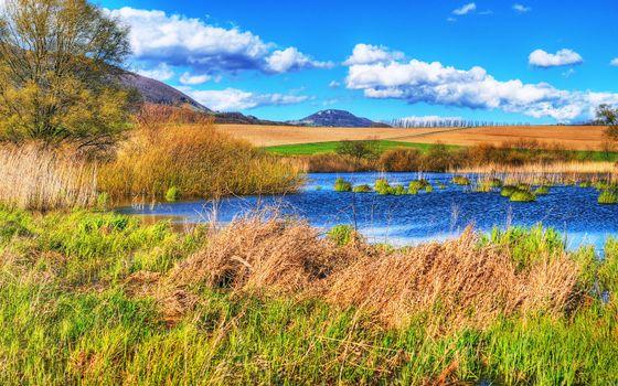 Фото бесплатно озеро, трава, кустарник