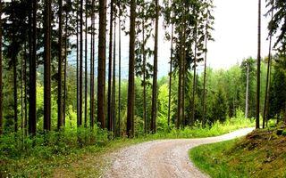 Бесплатные фото горы, лес, деревья, кустарник, трава, дорога