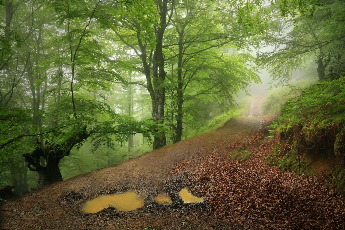 Free photo forest, trees, road - to desktop