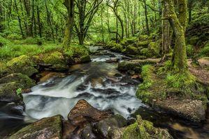 Бесплатные фото река,лес,деревья,камни,природа