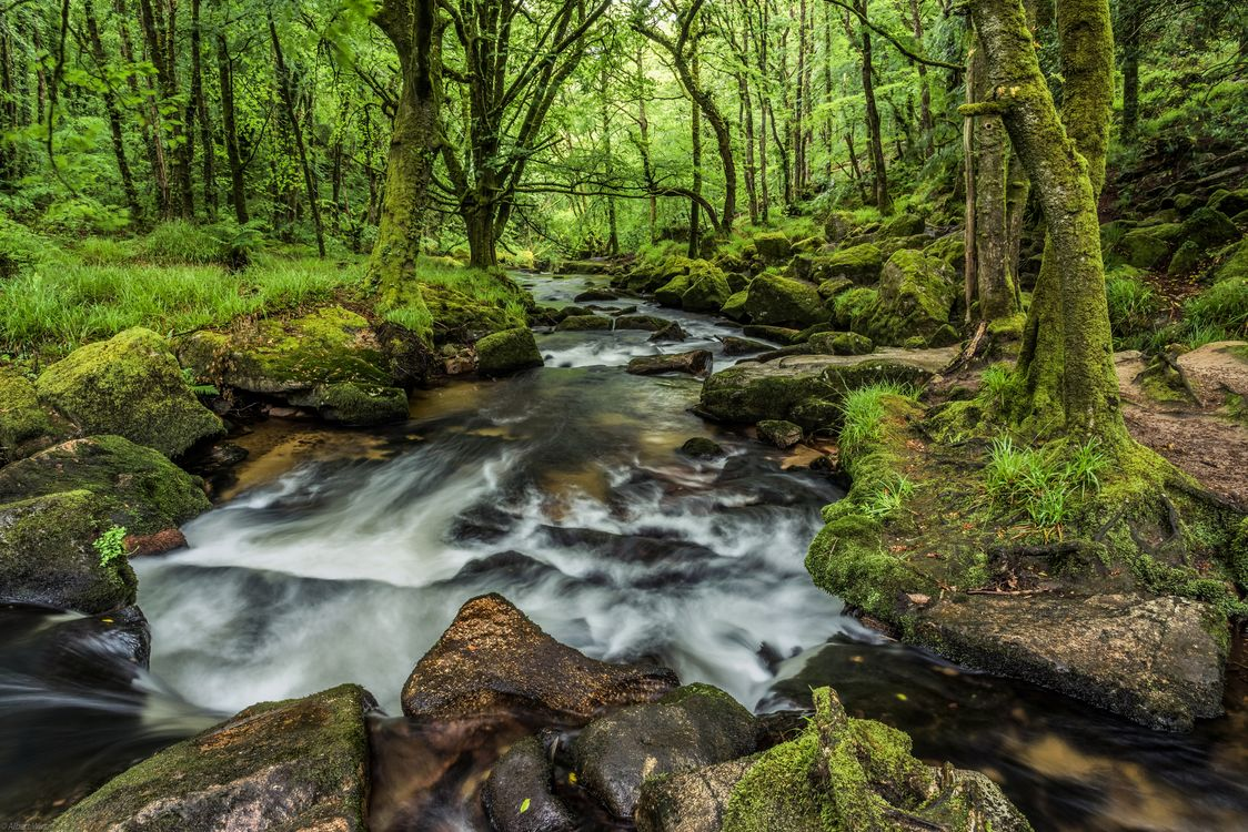 Free photo river, forest, trees - to desktop