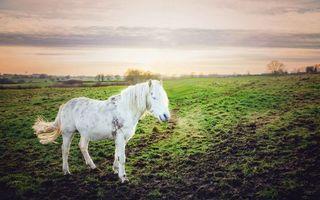 Бесплатные фото конь, лошадь, белая, морда, грива, хвост, поле