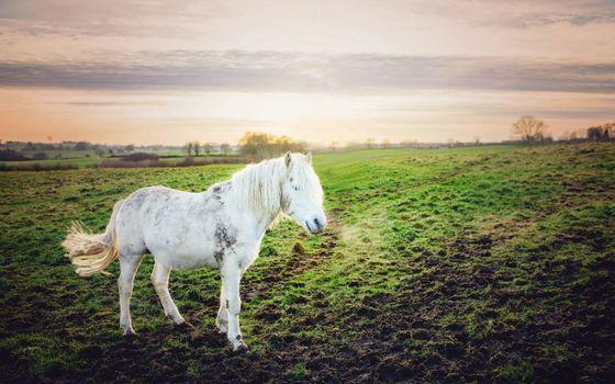 Заставки конь, лошадь, белая