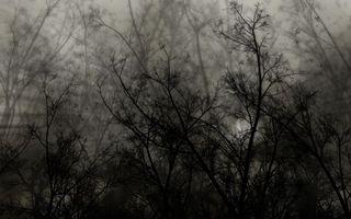 Бесплатные фото лес,темные тона,деревья,кусты