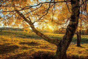 Бесплатные фото закат,осень,поле,деревья,пейзаж