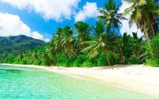 Фото бесплатно горы, пальмы, пляж