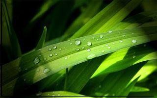 Заставки трава,листья,зеленые,капли,вода,роса