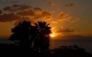 Заставки вечер, побережье, деревья, море, горизонт, солнце, закат, небо, облака