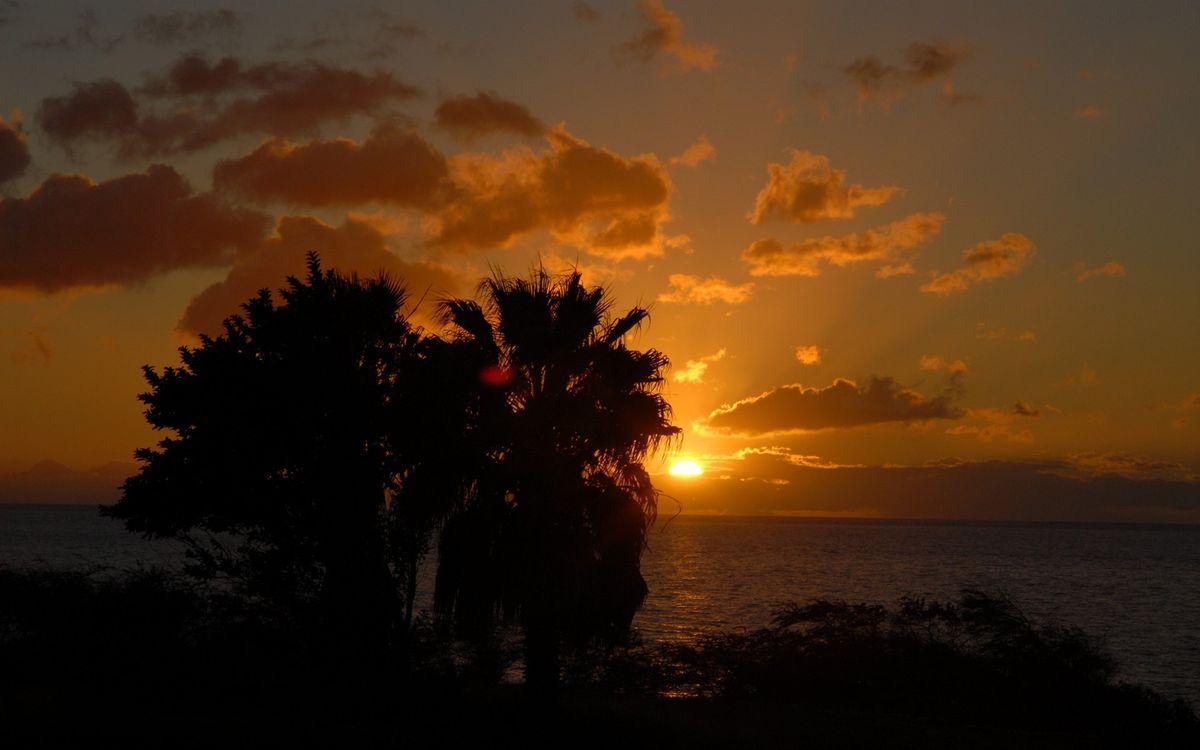 Фото бесплатно вечер, побережье, деревья - на рабочий стол
