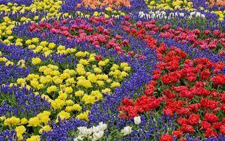 Бесплатные фото клумба,цветы,разные,композиция,бутоны,лепестки,листья