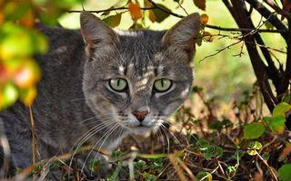 Бесплатные фото кошка,морда,глаза,зеленые,шерсть,трава,ветки