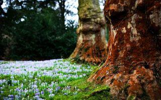 Photo free shrub, trees, trunks