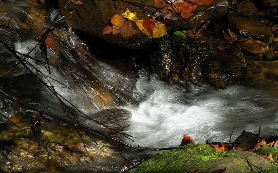 Бесплатные фото ручей,течение,камни,мох,ветви,листва