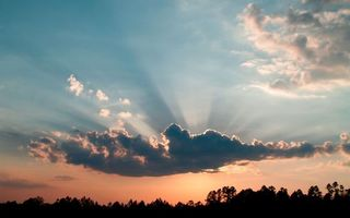 Бесплатные фото вечер,деревья,макушки,небо,облака,солнце,лучи