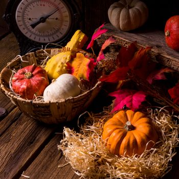 Pictures for autumn leaves, basket and without registration