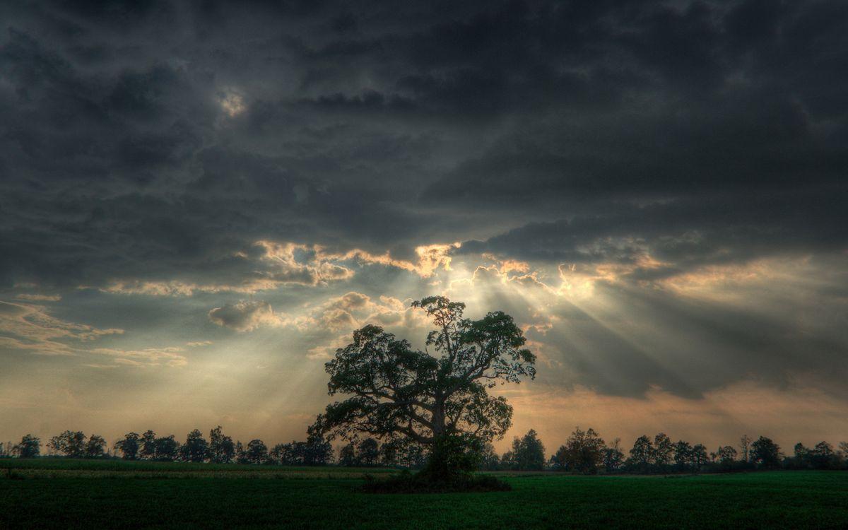 Фото бесплатно поле, деревья, небо, облака, солнце, лучи - на рабочий стол