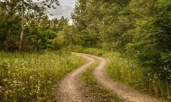 Фото бесплатно дорога, лес, деревья