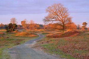 Красивые обои поле, дорога